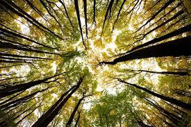 nature as healer
